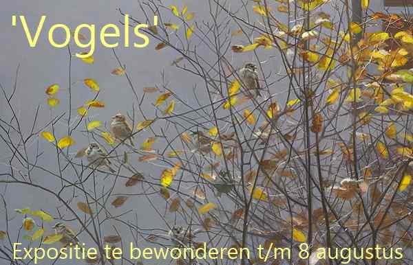 2020-05 Vogels tm (600).jpg